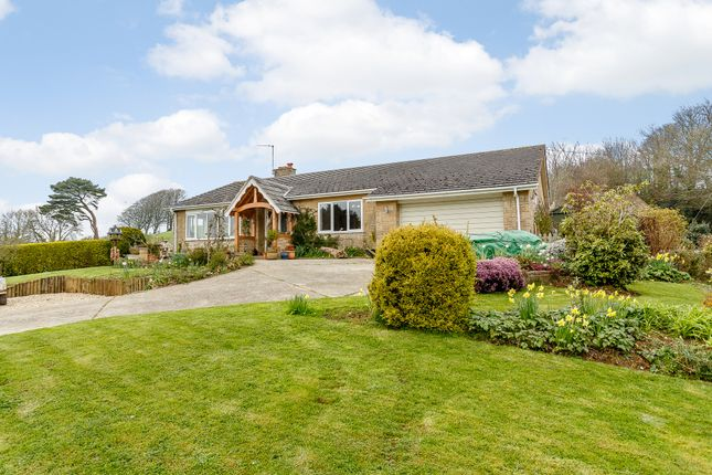 Thumbnail Bungalow for sale in Little Hayes, Broadwindsor, Dorset