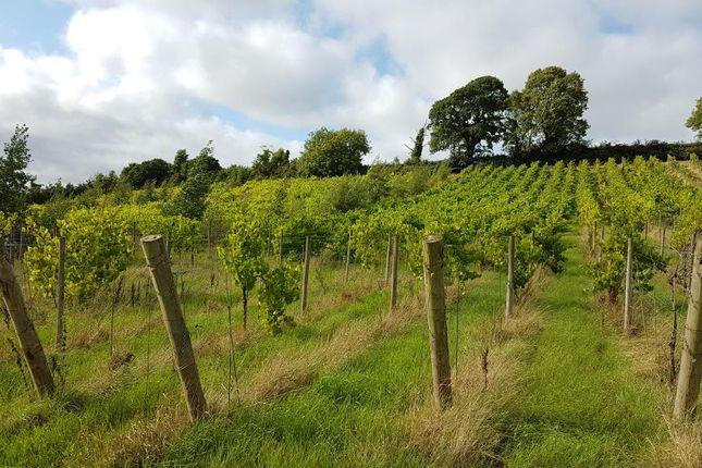 Thumbnail Land for sale in Vineyard, Chapel Hill, Cheriton Fitzpaine, Crediton, Devon