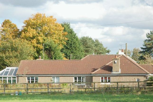 Thumbnail Detached bungalow for sale in Kirkholme, Kirkley, Northumberland