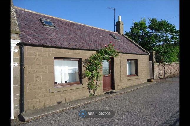 Thumbnail Semi-detached house to rent in Seaview Terrace, Johnshaven