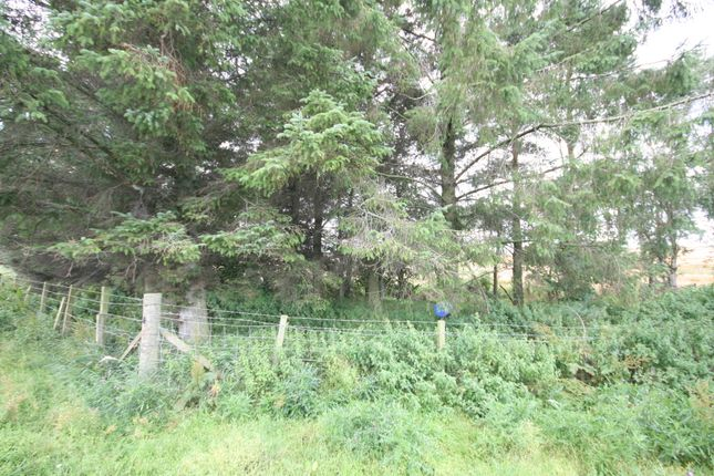 Plot At The Pines, Tippertait, Garmouth IV32