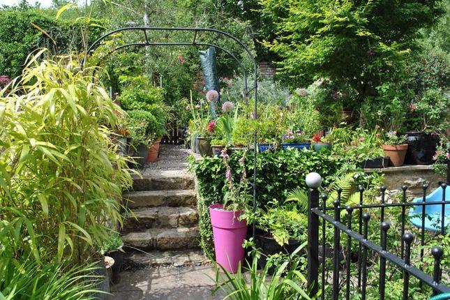 Rear Garden In The Summer
