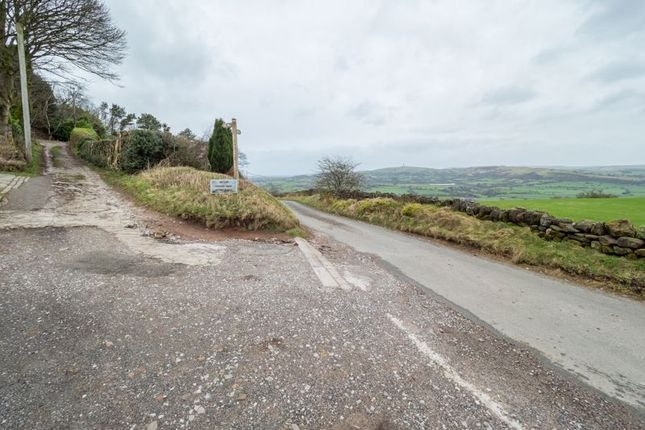 Red Lane & Driveway