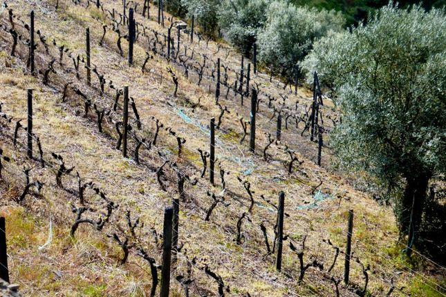 farm for sale in port wine estate in douro vila real