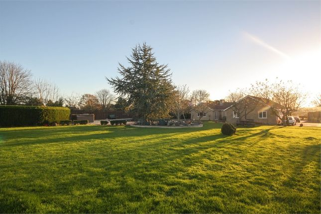 Thumbnail Detached bungalow for sale in The Orchard, Draycott Road, Cheddar, Somerset