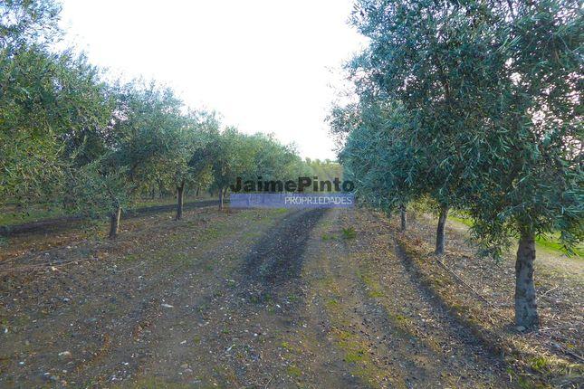 Thumbnail Farm for sale in 210 Hectares Olive Grove., Vila Real, Et Al., Vila Real (City), Vila Real, Norte, Portugal