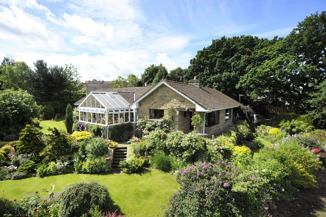 Thumbnail Detached bungalow for sale in Silverdale Close, Darley, Harrogate