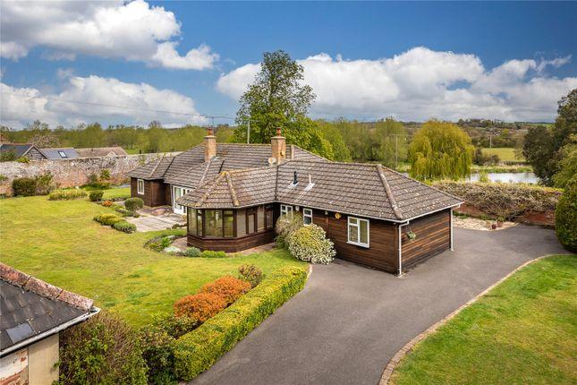 5 bed detached bungalow for sale in Spetisbury, Blandford Forum, Dorset DT11