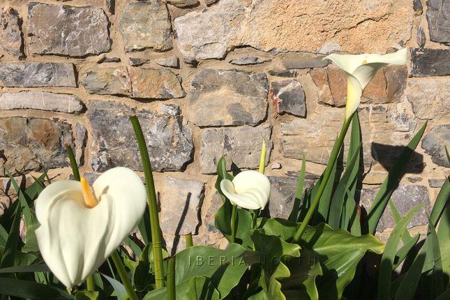 Mature Planting of Miyar, Cangas De Onís, Asturias, Spain