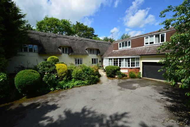 Thumbnail Detached house for sale in Great Yeldham, Halstead, Essex