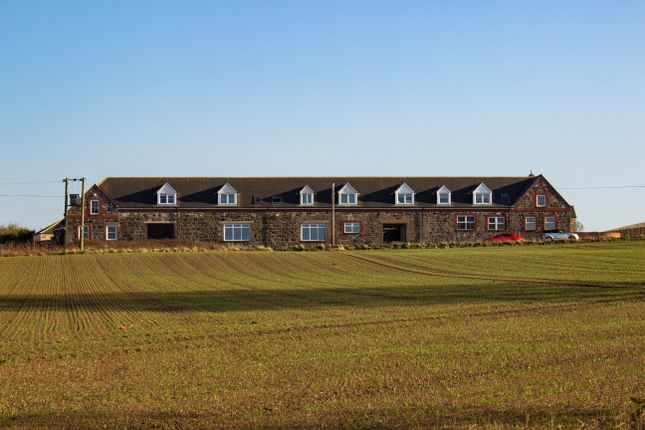 Thumbnail Terraced house for sale in Barns Of Craig, Ferryden, Montrose