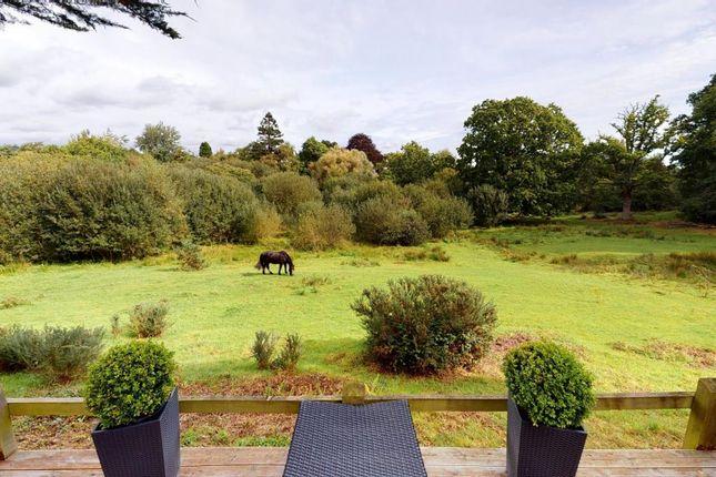 Rear View of Clyst Hayes Gardens, Budleigh Salterton, Devon EX9