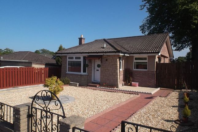 Thumbnail Bungalow to rent in Halley Place, Dundee