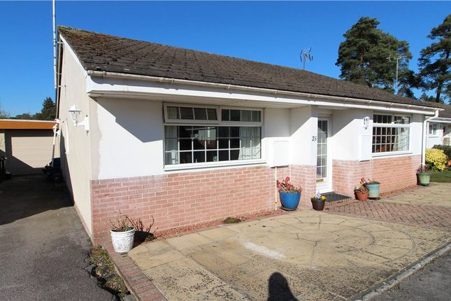 Thumbnail Detached bungalow for sale in St. Ives, Ringwood, Hampshire