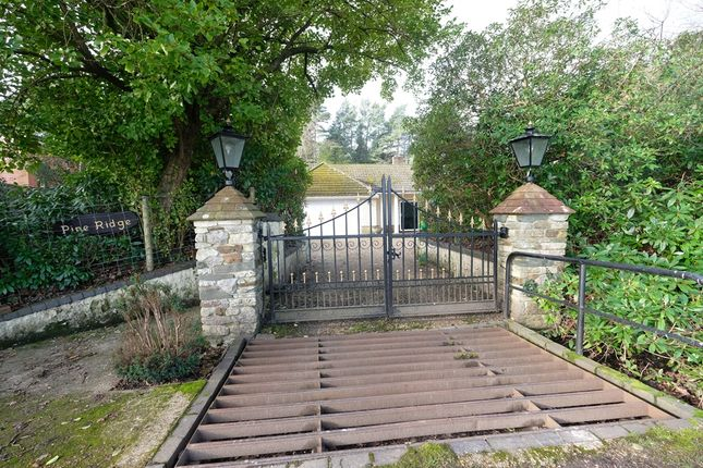 Cattle Grid  of Hill Top, Beaulieu SO42