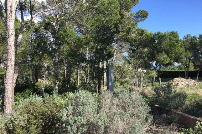 07184 Calvià, Balearic Islands, Spain