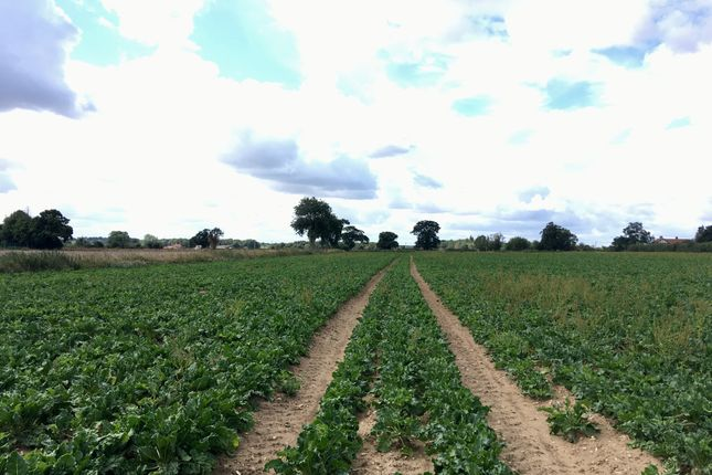 Thumbnail Farm for sale in Bergh Apton Road, Alpington, Norwich
