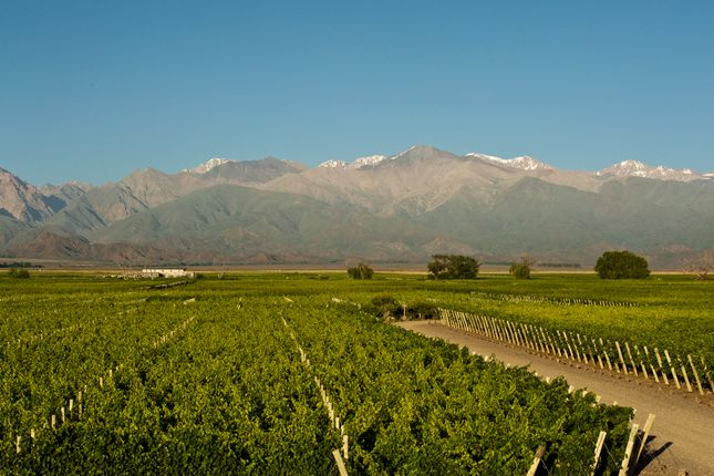Mendoza Uco Valley Argentina Land For Sale 34954245