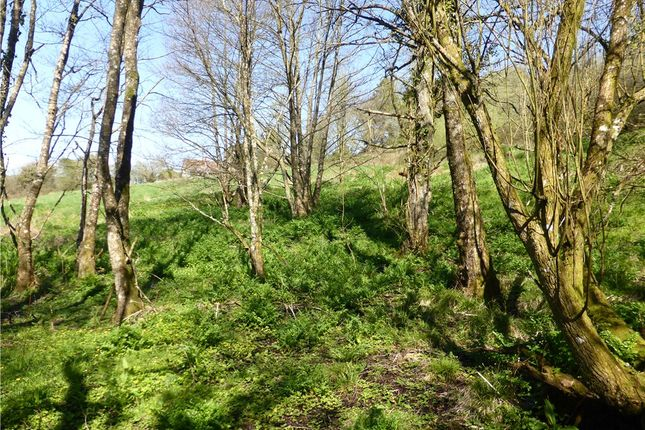 Woodland of Lower Ridge, Chardstock, Axminster, East Devon TA20