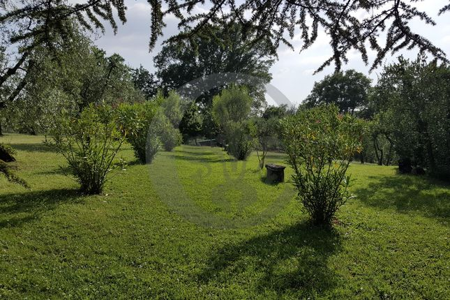 Garden of Via Ponte Al Ramo, Foiano Della Chiana, Arezzo, Tuscany, Italy