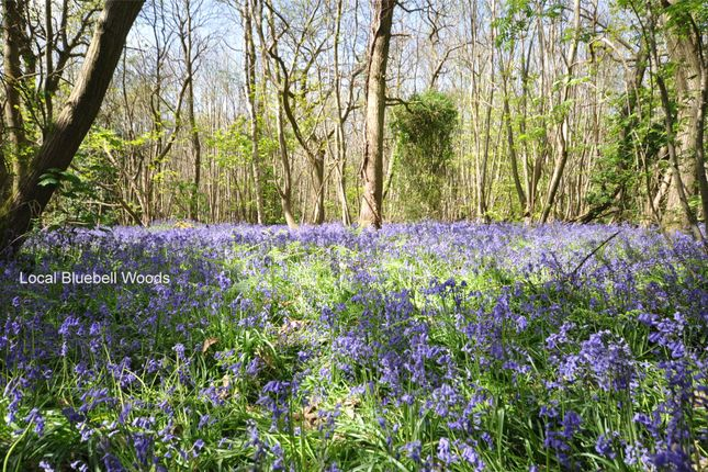 Bluebell Woods of Maddoxwood, Lavant Road, Chichester, West Sussex PO19