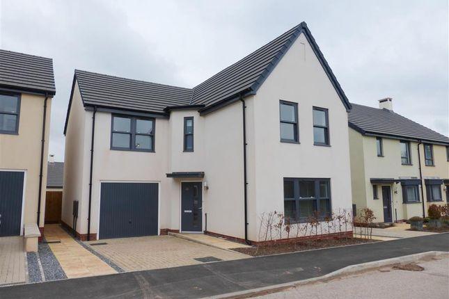 Thumbnail Property to rent in White Rock Road, Paignton