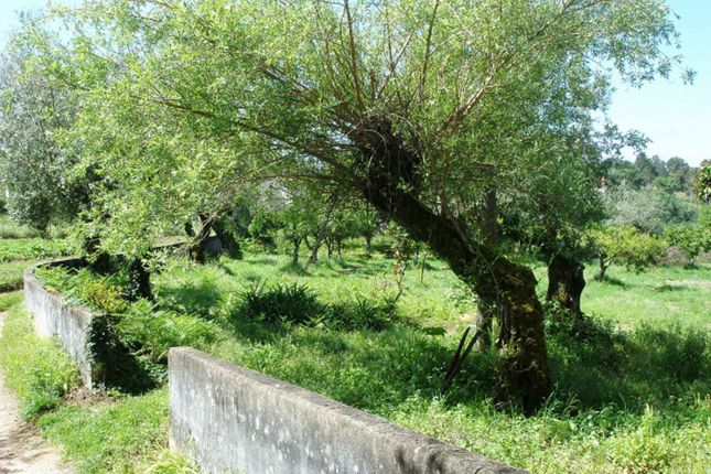Property for sale in Ansiao, Central Portugal, Portugal