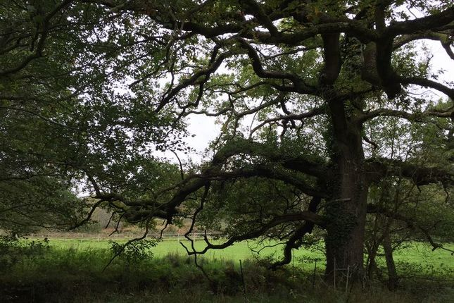 Property For Sale In Cadnam New Forest