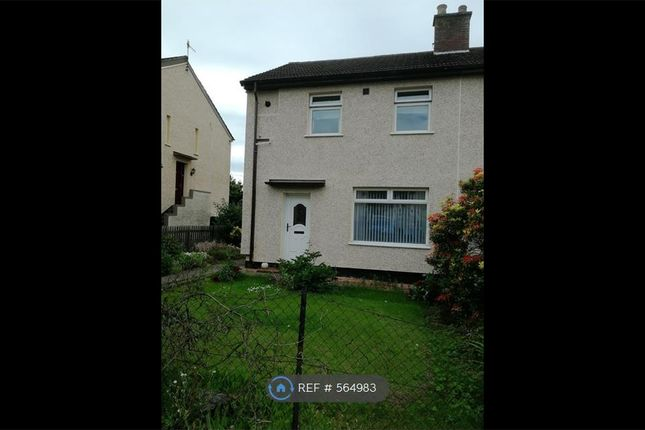 Thumbnail Semi-detached house to rent in Douglas Road, Scone, Perth