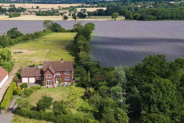 Thumbnail Detached house for sale in The Common, Wacton, Norwich