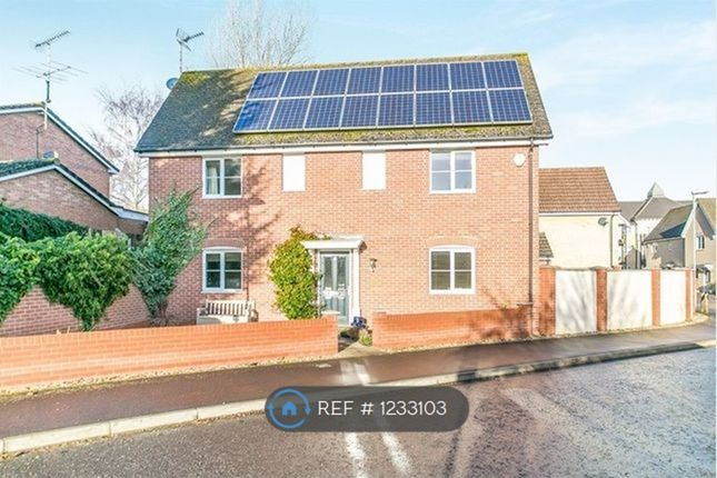 4 bed detached house to rent in Summerfields, Sible Hedingham, Halstead CO9