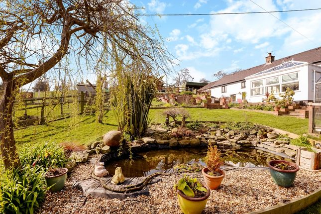Thumbnail Detached house for sale in Loggerheads Road, Cilcain, Mold