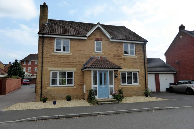 Thumbnail Detached house to rent in Merevale Way, Yeovil