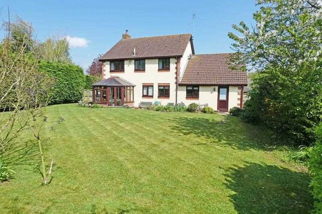 Thumbnail Detached house for sale in Old Hall Meadow, Rattlesden, Bury St. Edmunds