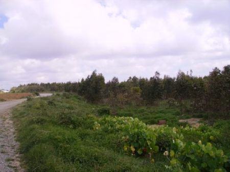 Thumbnail Land for sale in Peniche, Silver Coast, Portugal