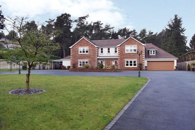 Thumbnail Detached house for sale in Avon Avenue, Avon Castle, Ringwood