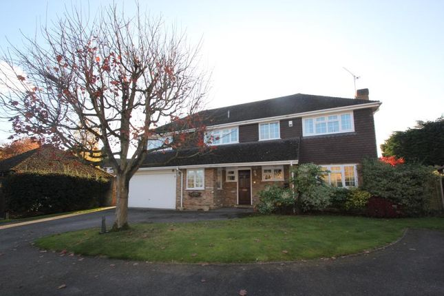 Thumbnail Detached house to rent in Spruce Drive, Lightwater