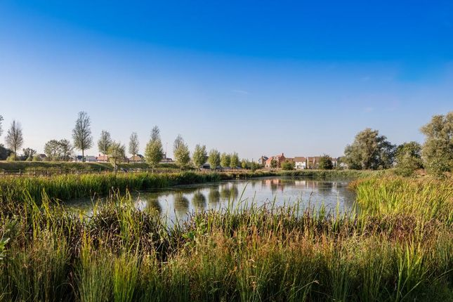 """Thumbnail Property for sale in """"The Fairfield"""" at Avocet Way, Ashford"""