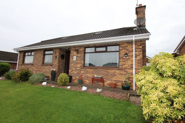 Thumbnail Bungalow for sale in Collin Heights, Carrickfergus