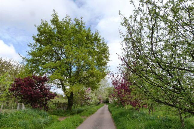 Approach of Den Lane, Collier Street, Marden, Kent TN12