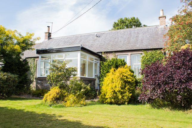 Thumbnail Country house to rent in Forfar
