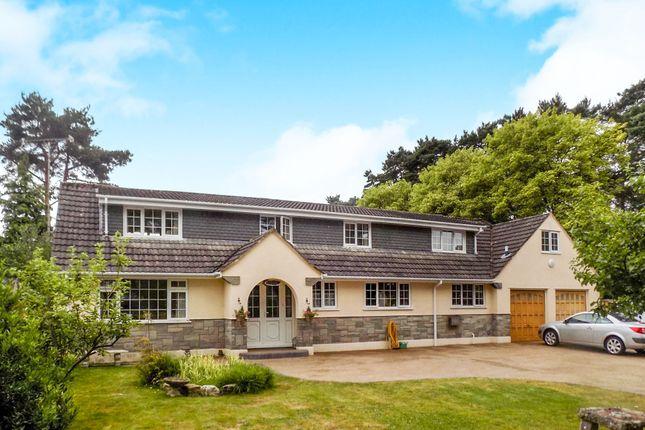 Thumbnail Detached bungalow for sale in Ashley Drive West, Ashley Heath, Ringwood