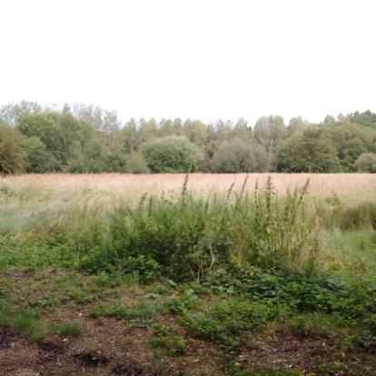 Thumbnail Land for sale in Church Road, Willington