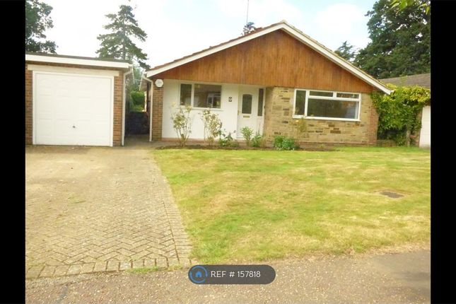 Thumbnail Bungalow to rent in Cleve Way, Billingshurst