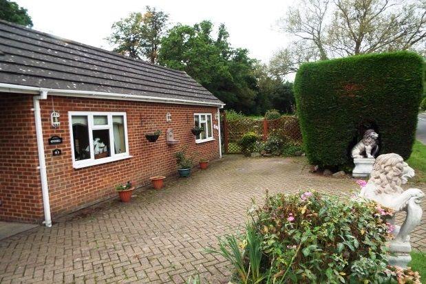 Thumbnail Detached bungalow to rent in Queens Road, Bisley, Woking