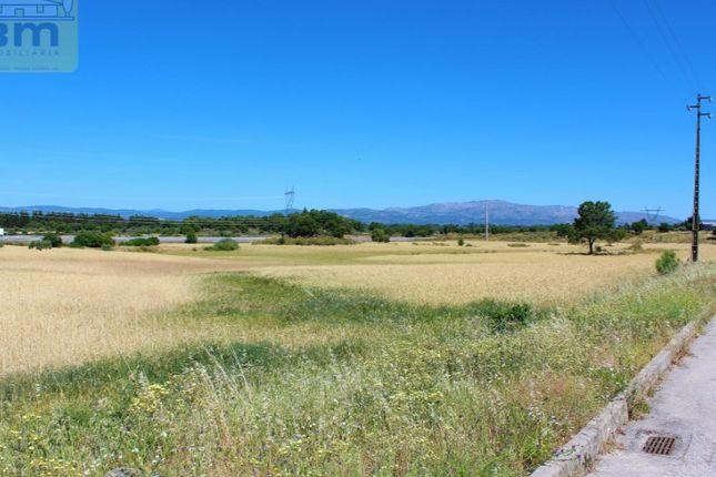 Land for sale in Alcains, Castelo Branco, Castelo Branco