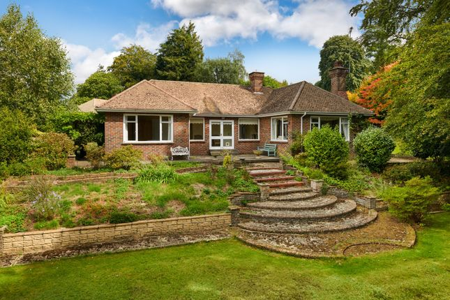 Thumbnail Detached bungalow for sale in Scotlands Drive, Haslemere, Surrey