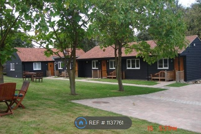 1 bed bungalow to rent in Poole Street, Great Yeldham, Halstead CO9