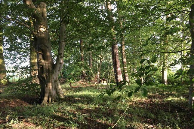 Woodlands of Annan DG12