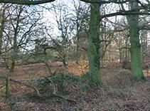 Thumbnail Land for sale in Ringshall, Berkhamsted